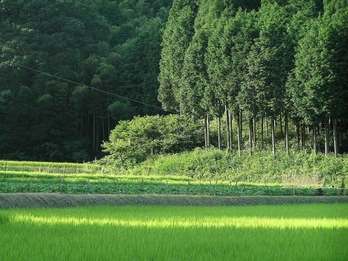 Landscape of farm fields and forest.
