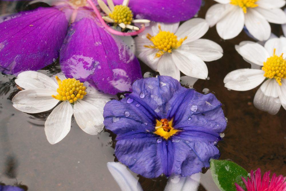flower-mandala-blue-flower-closeup